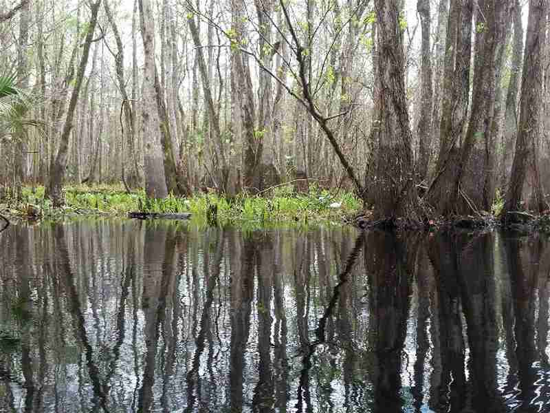 The mysterious Blackwater Creek is for nature lovers.