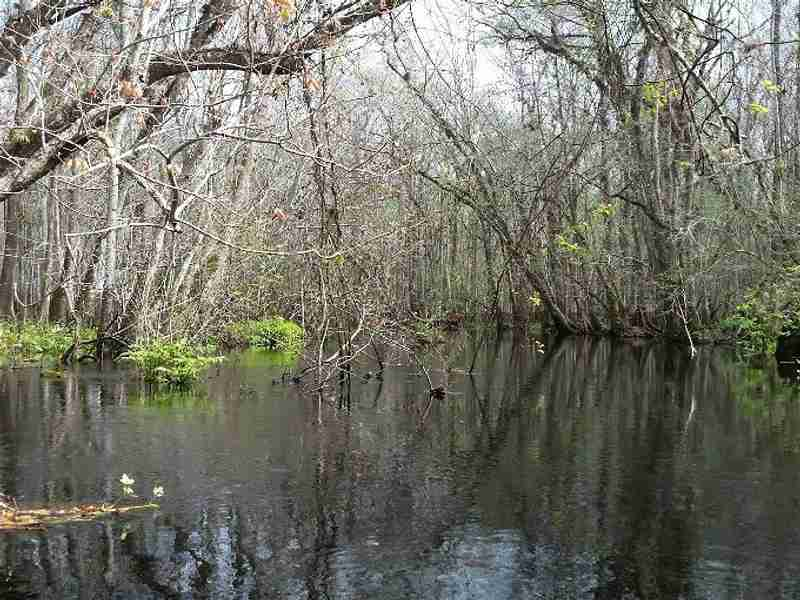 Blackwater Creek's mysterious scenery.