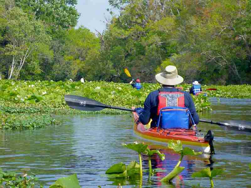 Only minutes from Orlando, this paddling trip is the most scenic in all of central Florida. Come enjoy a day of paddling clear water, sand pine scrub, hammocks, pine flat woods, and black water swamps.