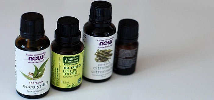 Can Tea Tree Oil Kill Lice?