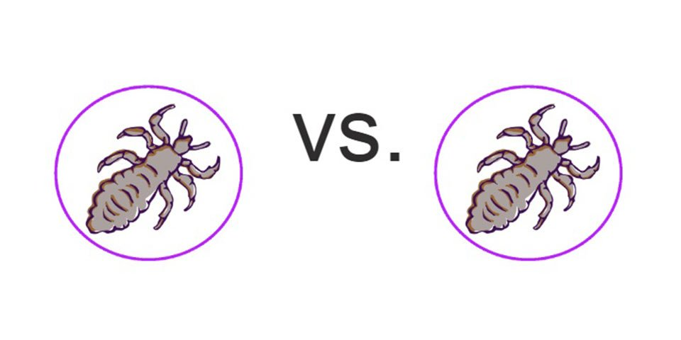 lice tips lice vs super lice cannot tell difference