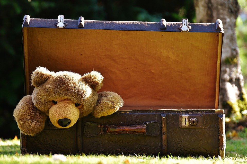 Teddy bear stuffed animal plush peeking out of suitcase like quarantine