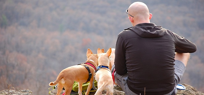 rear view of two dogs and a bald man sitting on the ground looking at nature.