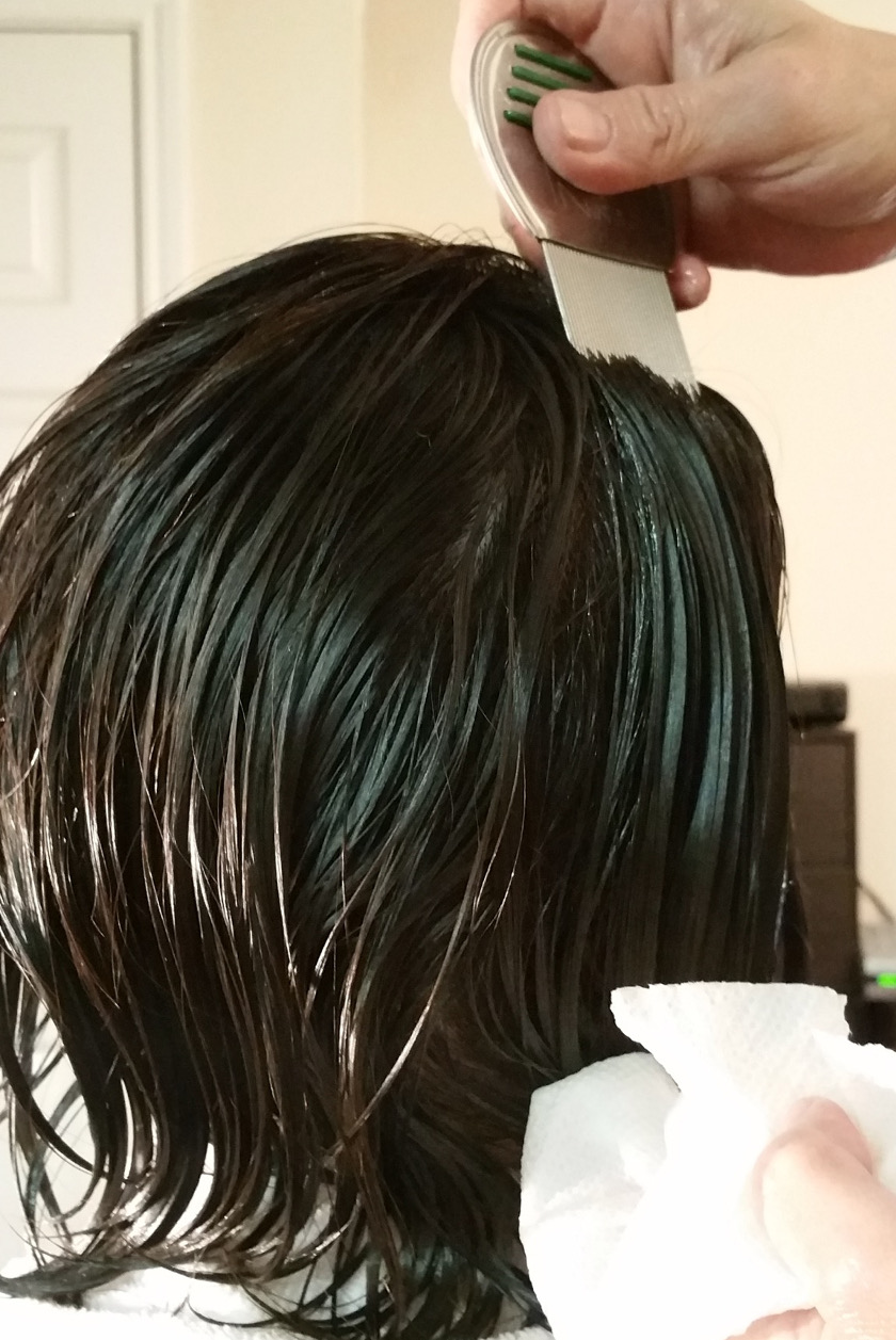 Professional lice combing oil through hair