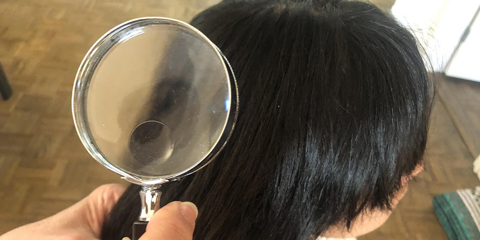 shawnee what if you find head lice treatment removal call professional service