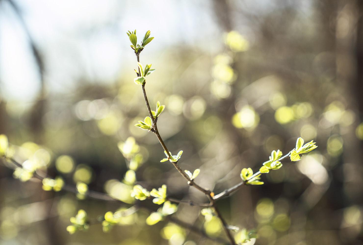 ftf_Spring Greenery Growing