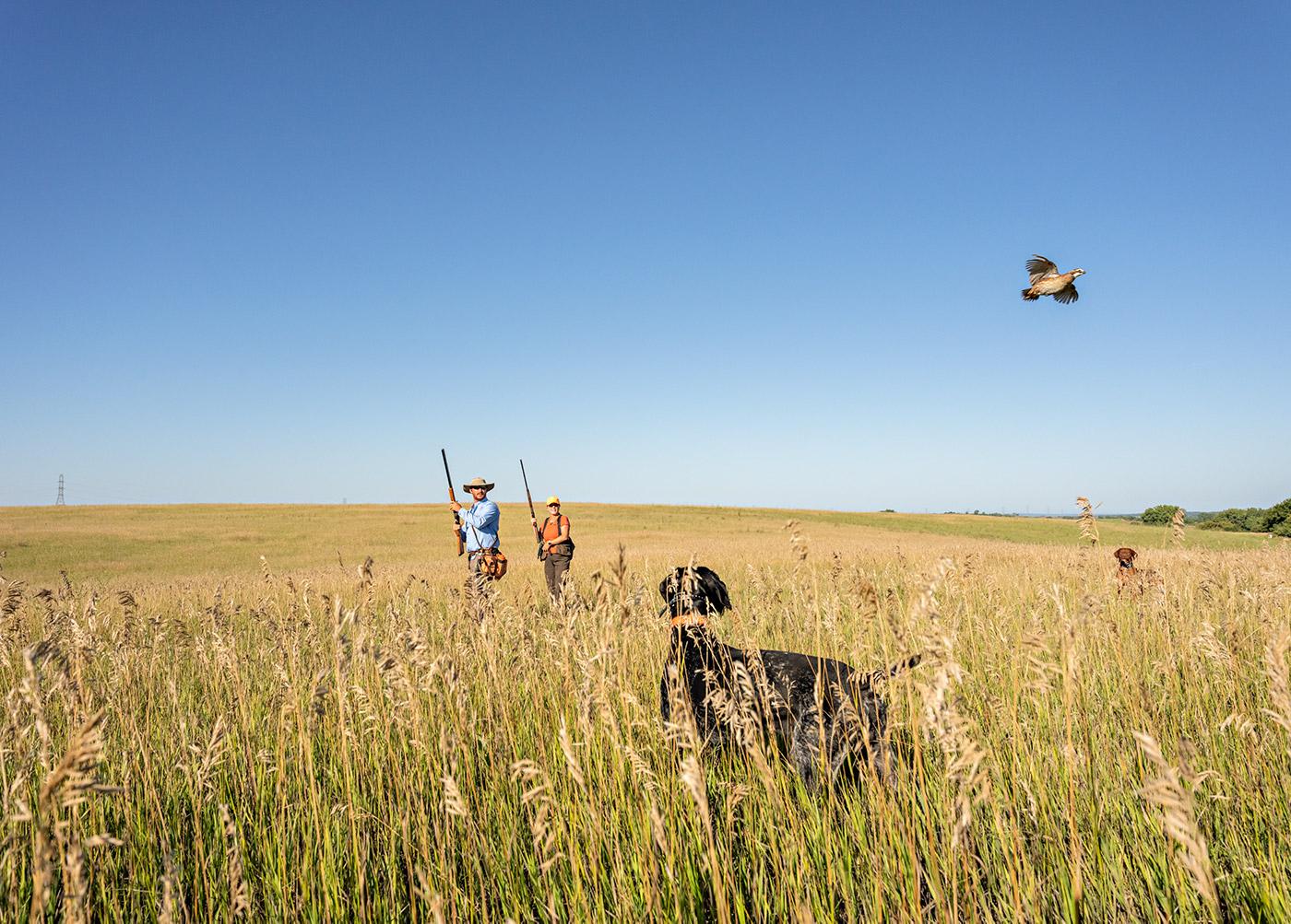 quail-training_ftf