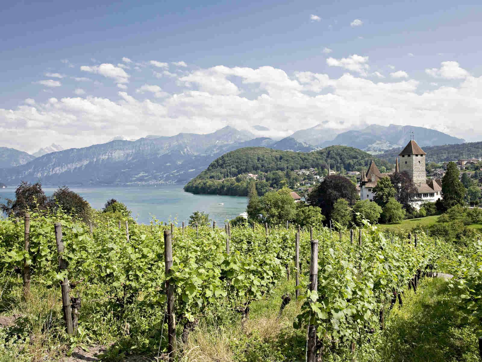 Weinberg see Schloss