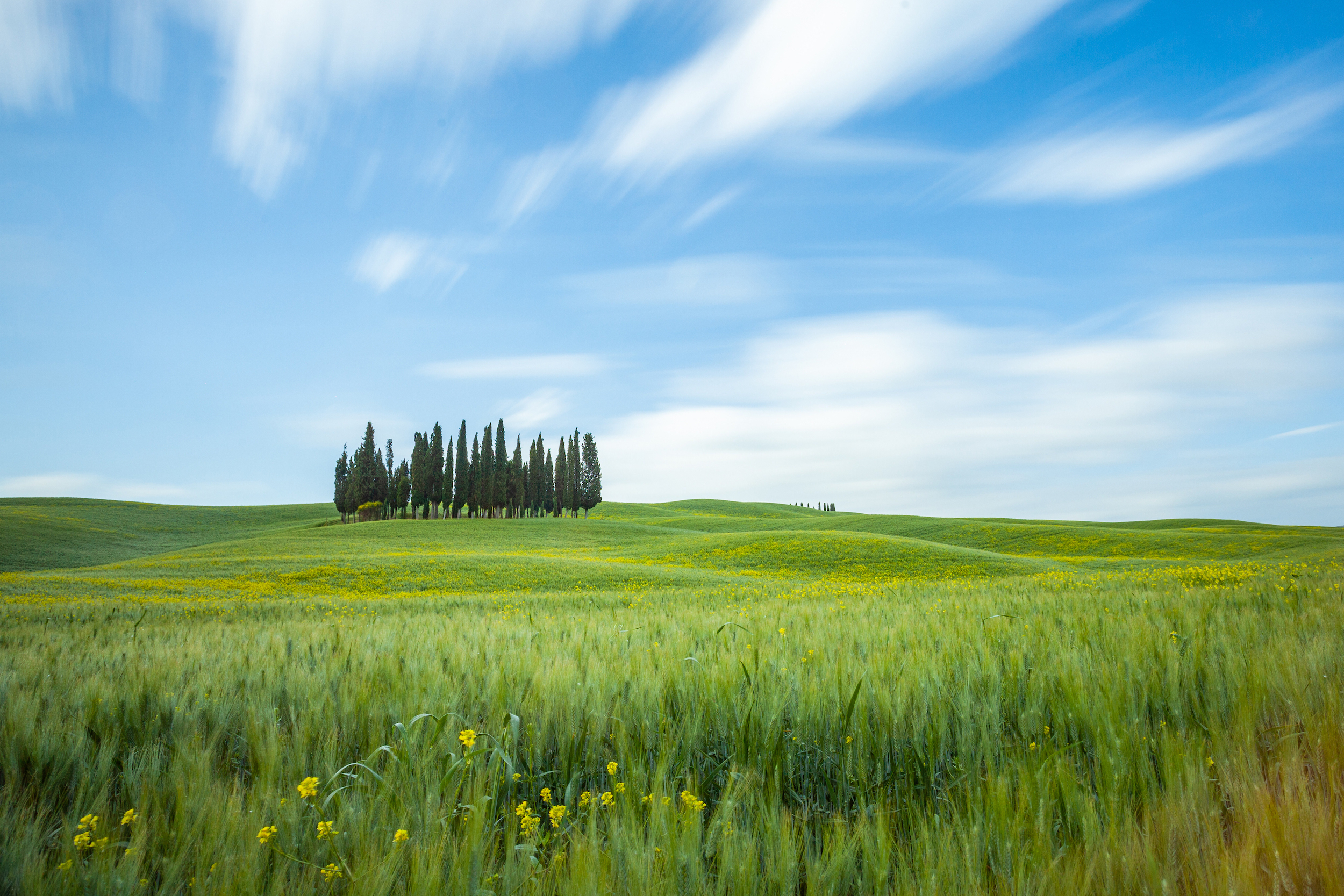 Daytime long exposure of fields and trees