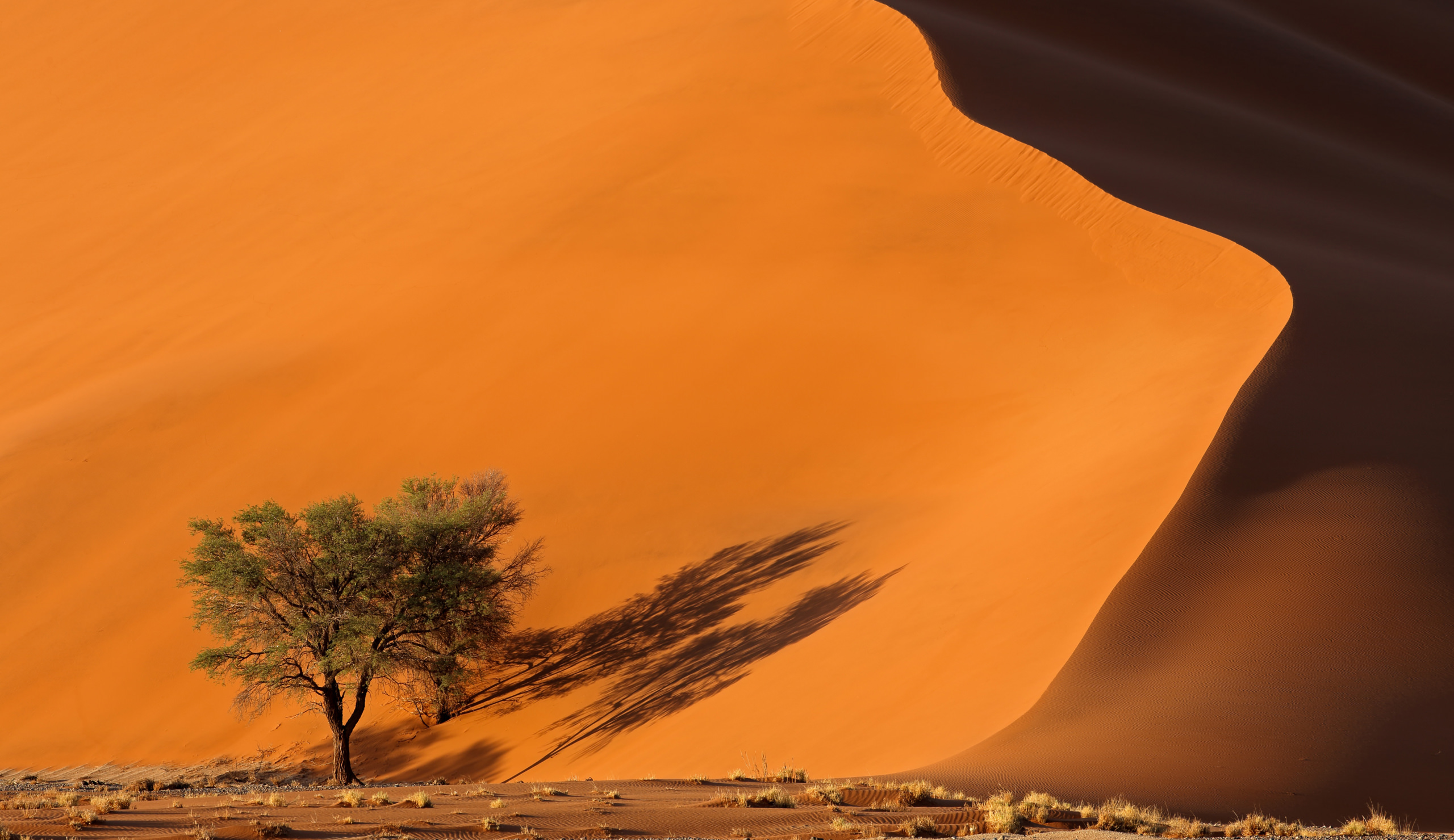 Desert landscape from Namibia with copyspace