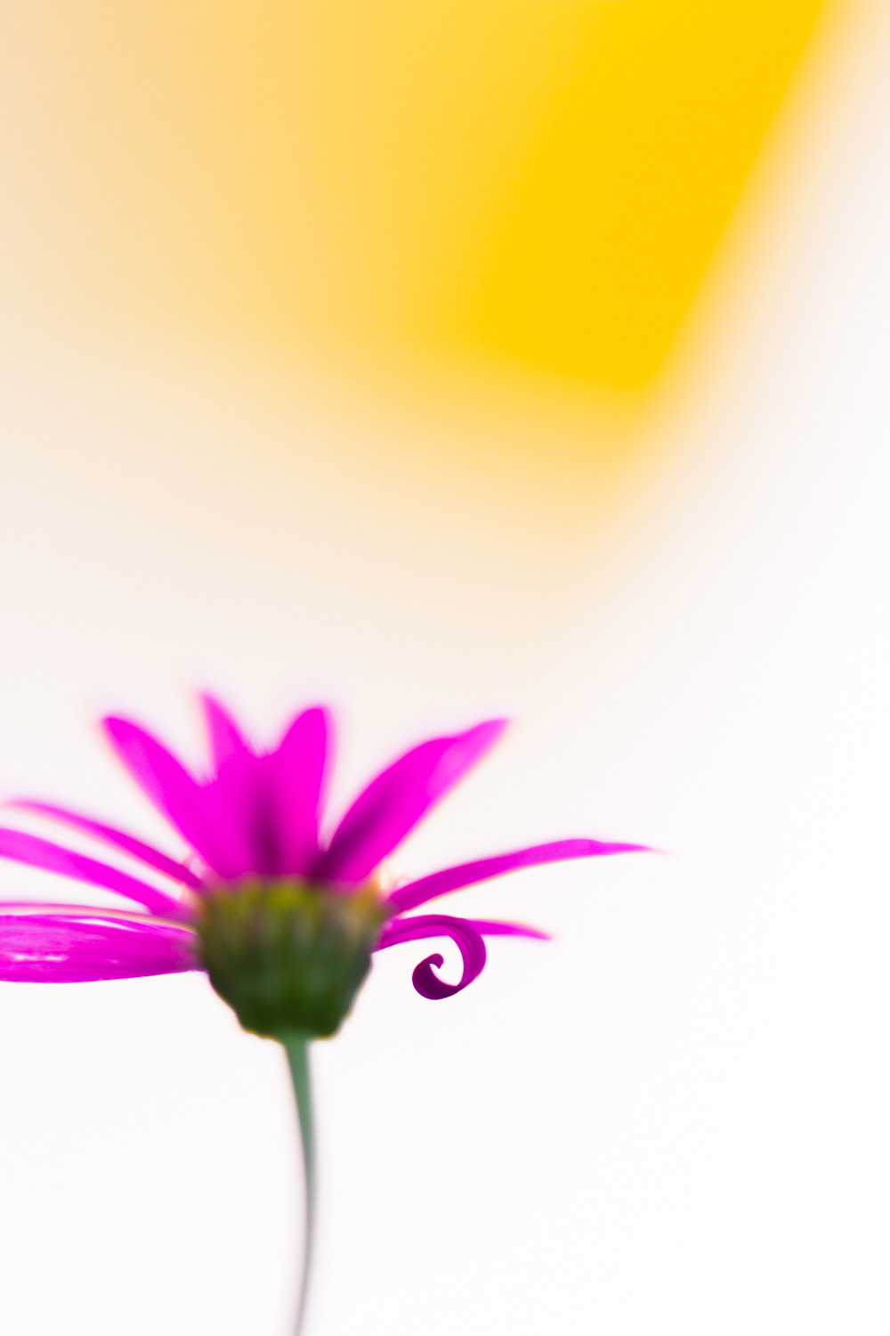 Macro image of a flower with a very shallow depth of field