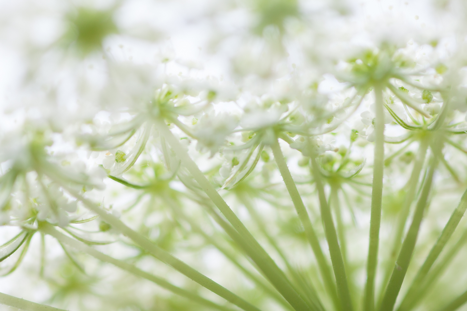 Macro image of a green and white plant