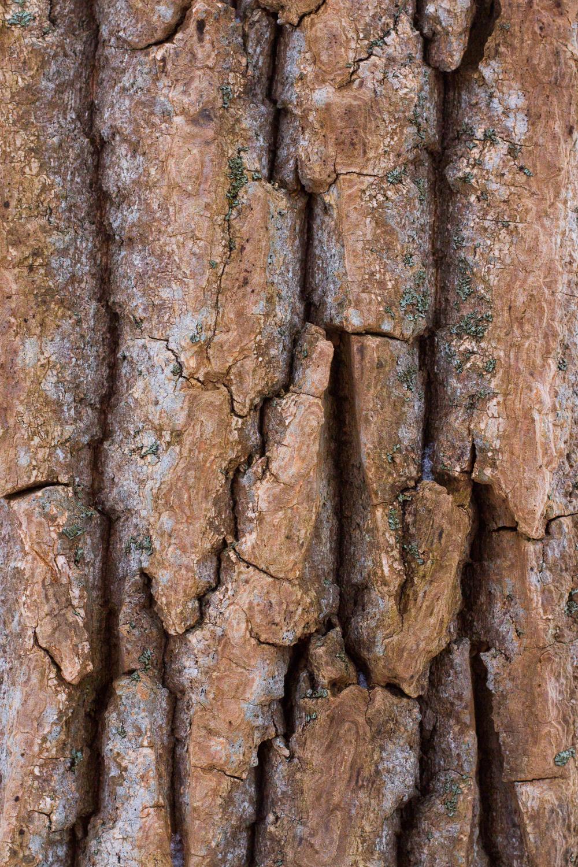 Close up image of tree bark