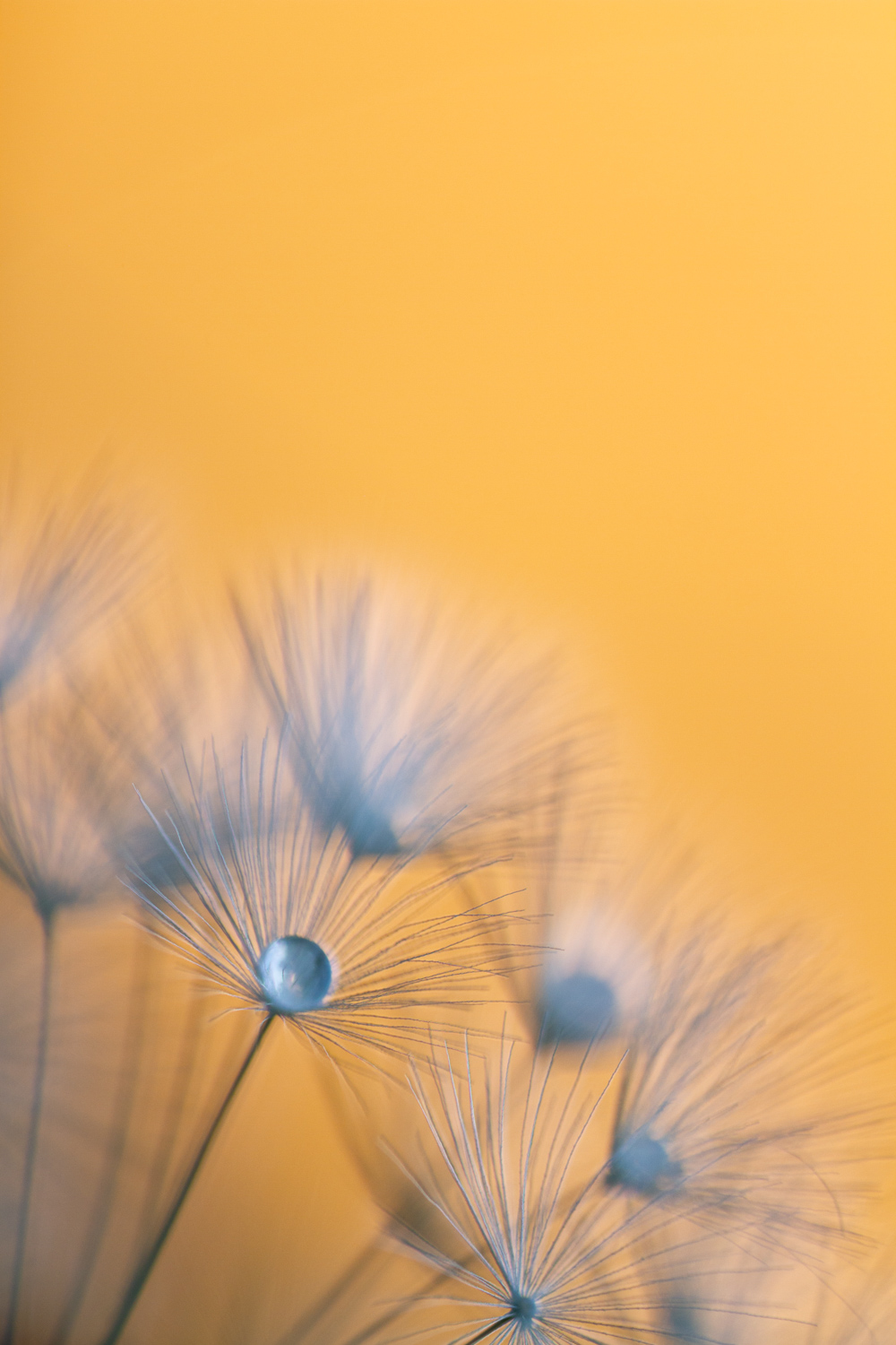 Macro shot of a flower against a yellow background