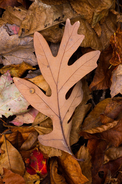 Macro shot of autumnal leaves