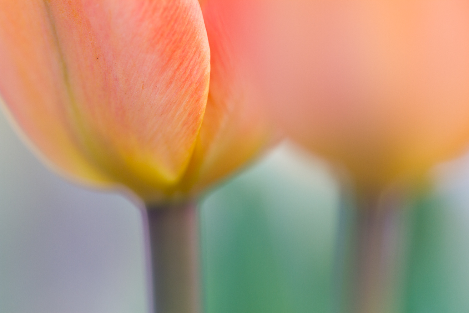 Extreme close up macro shot of a flower with a focus on the petal