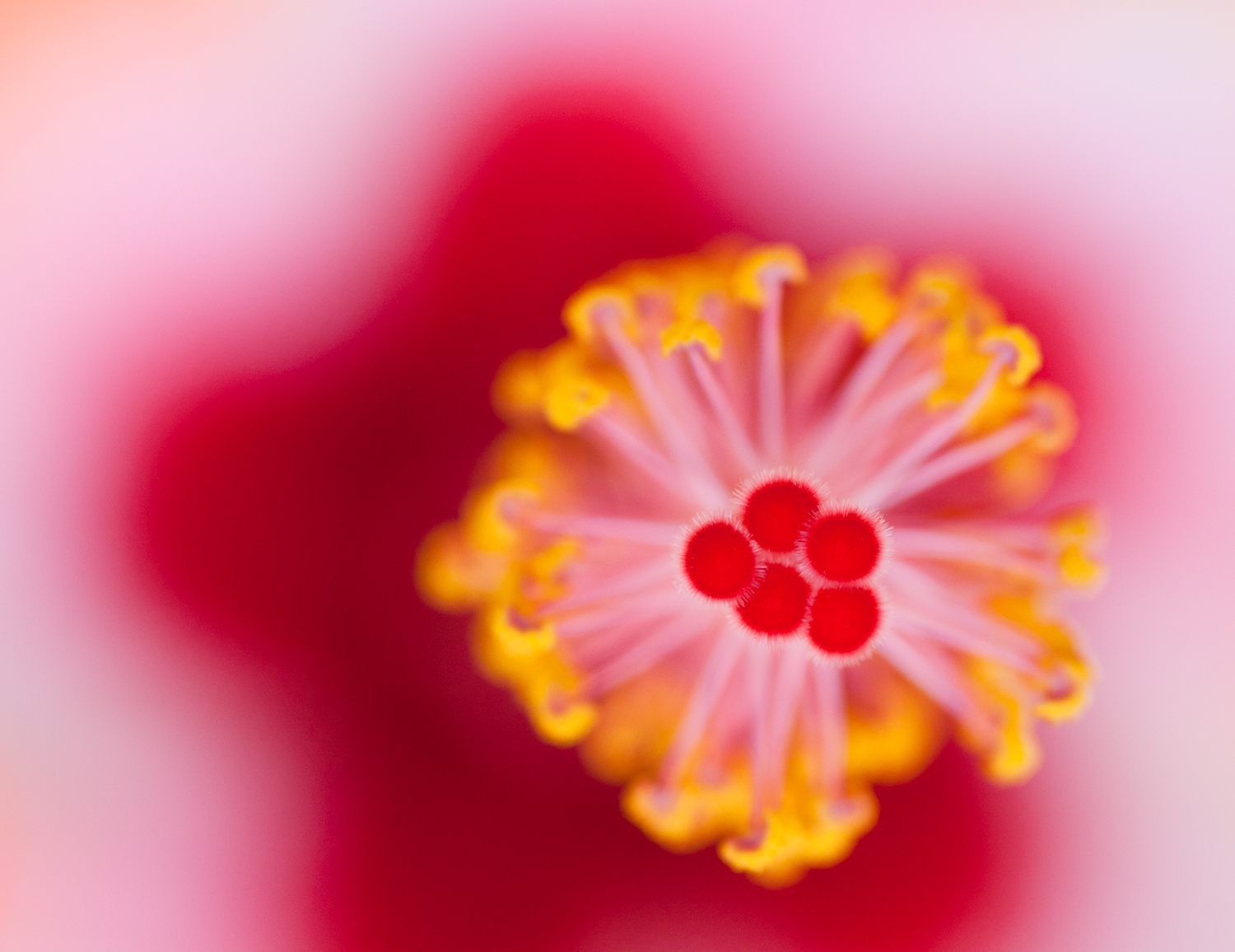 Ethereal macro shot of a red plant