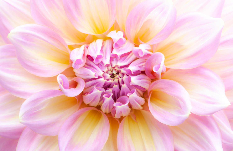 Full frame closeup of a flower