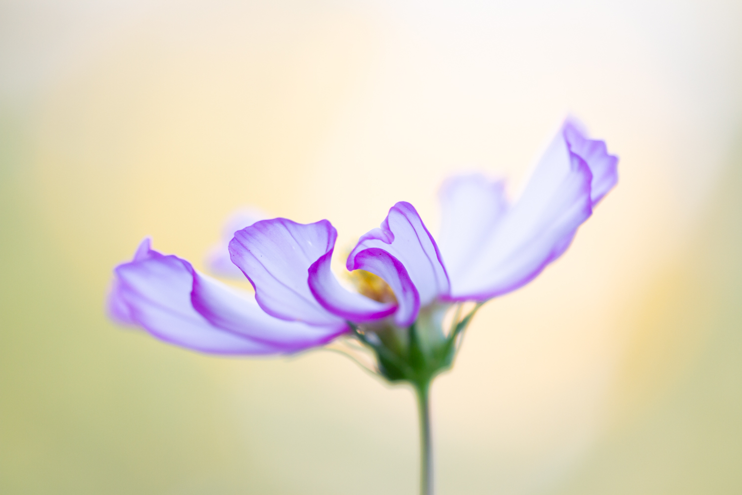 Macro shot of a flower with a shallow depth of field