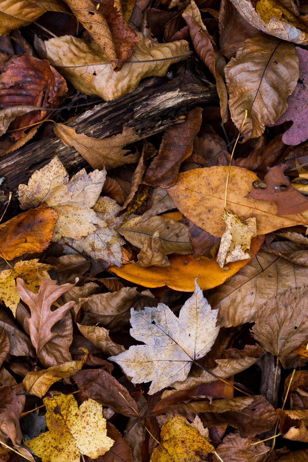 Overhead view of autumnal leaves