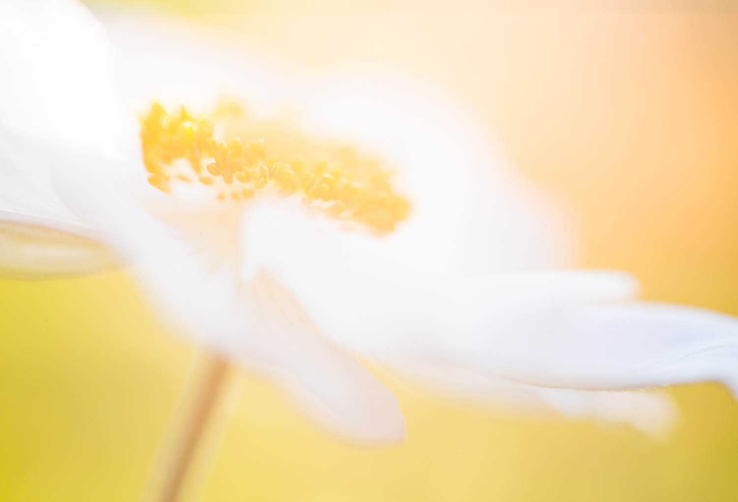 Macro shot of a flower in bright light
