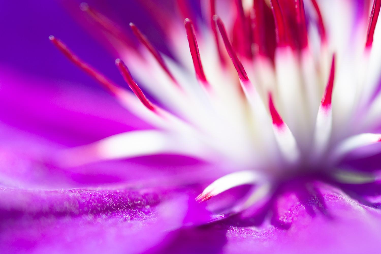 Vibrant macro of a flower
