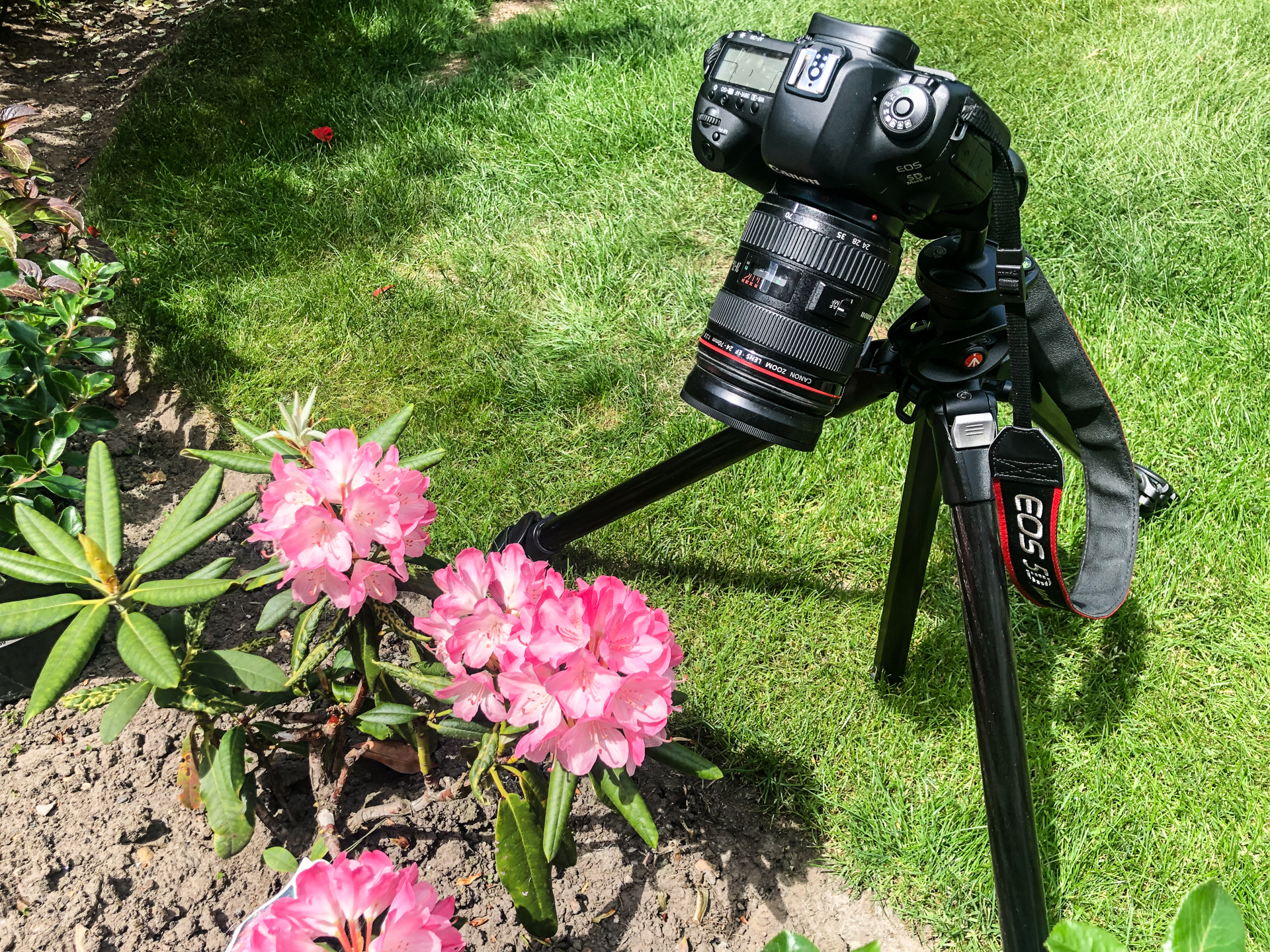 Camera on a tripod looking down at flowers