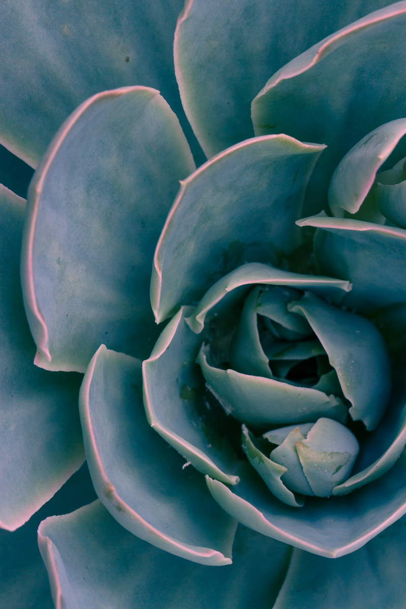 Close up of succulent leaves