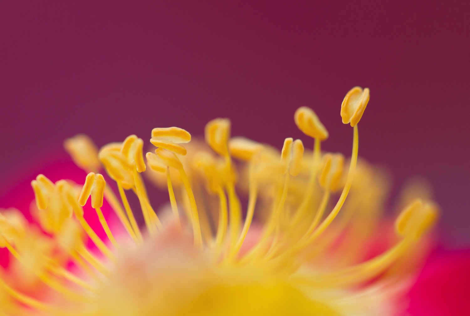 Extreme macro shot of a flower