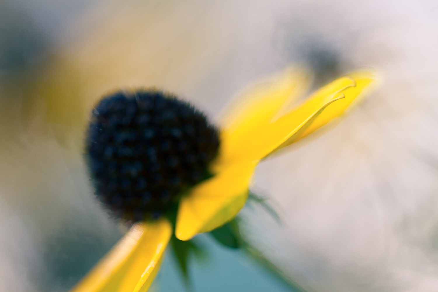 Extreme macro close up of a flower with subtle split toning applied