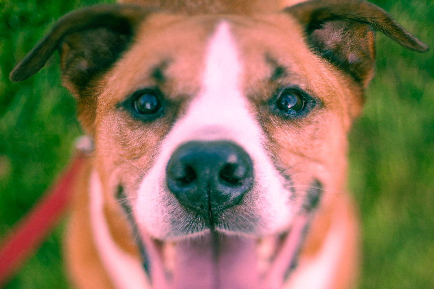 Portrait of a dog with a subtle split toning effect applied to the photo