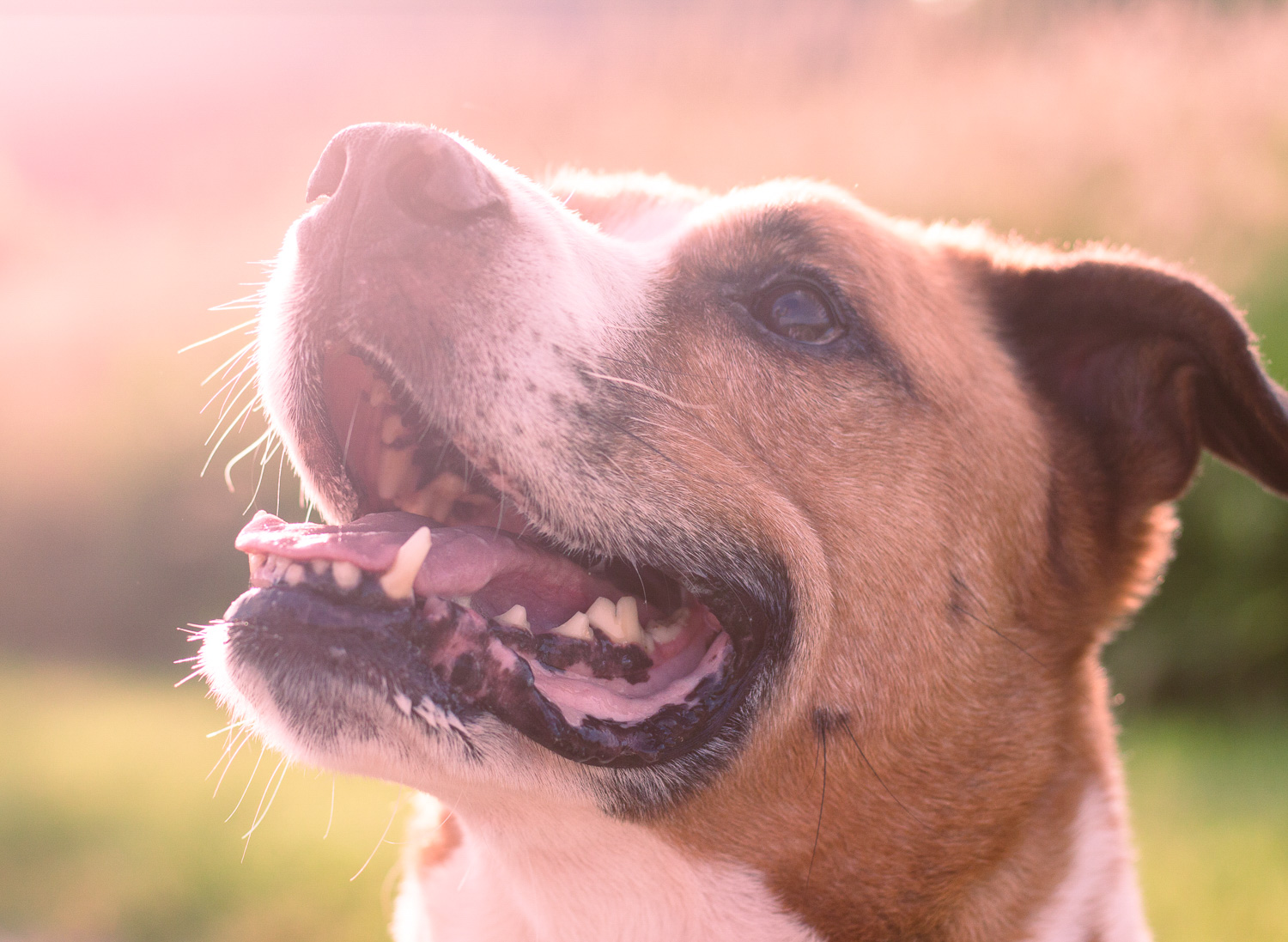 Portrait of a dog with the split toning effect applied
