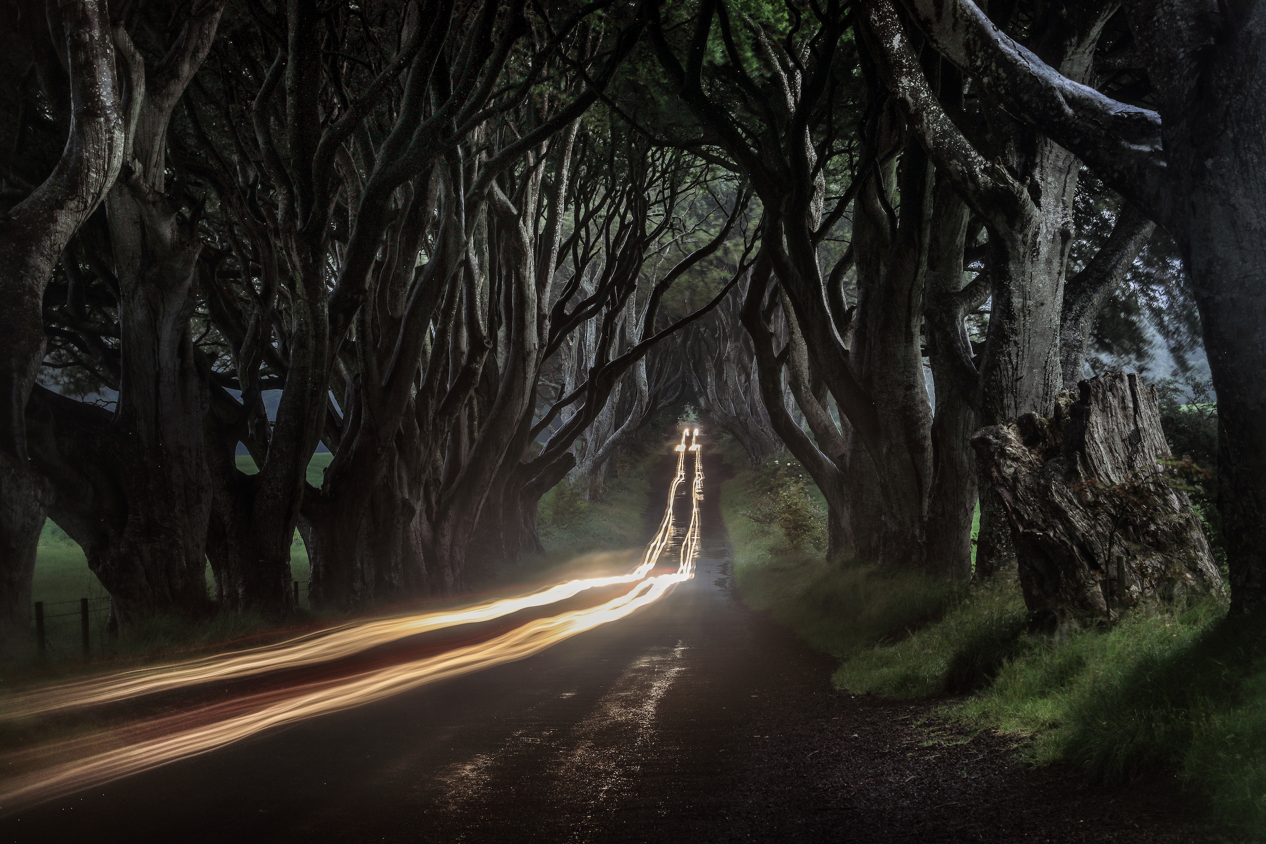 Long exposure at The Dark Hedges, Northern Ireland