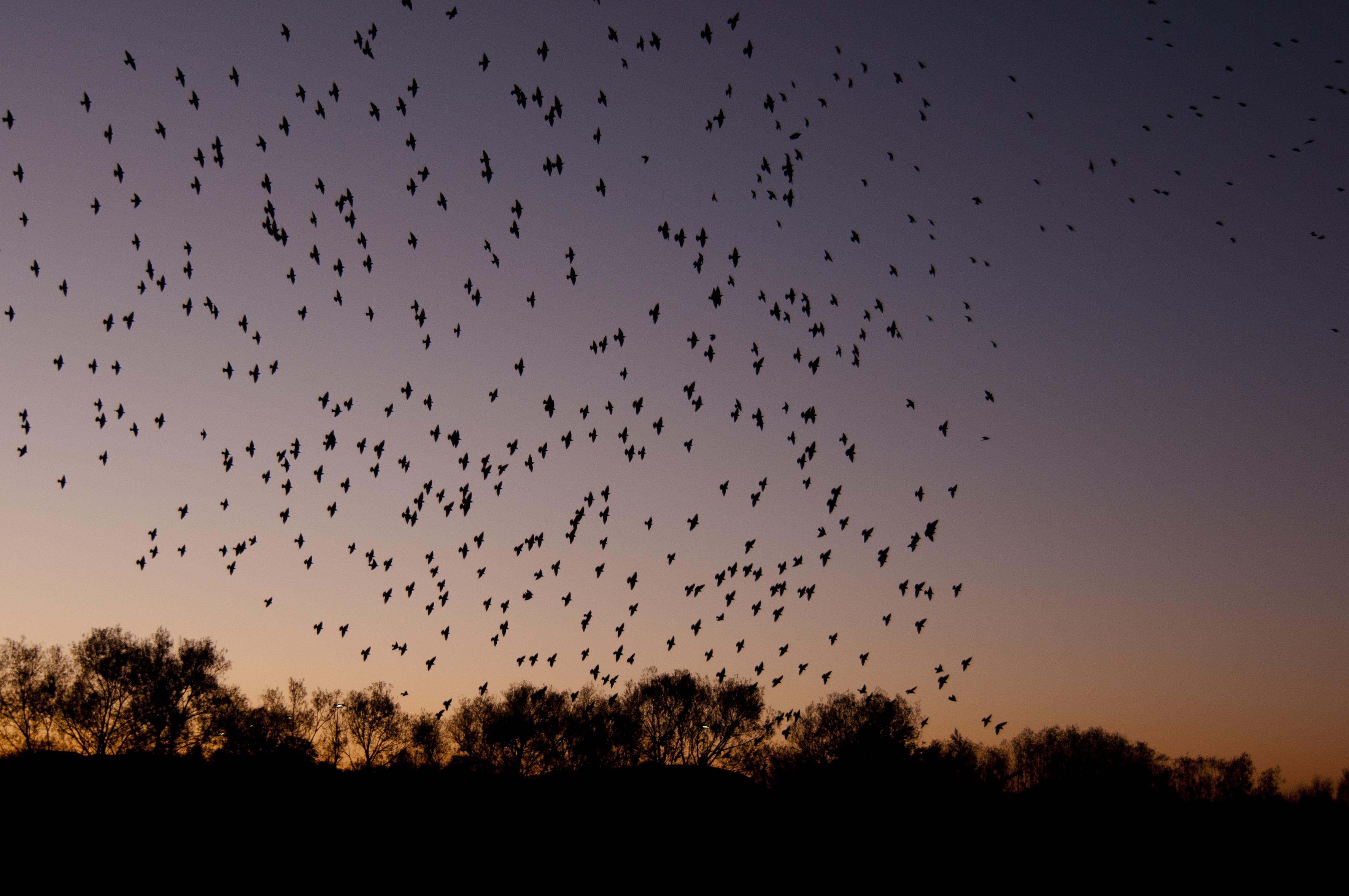 A flock of birds at dusk