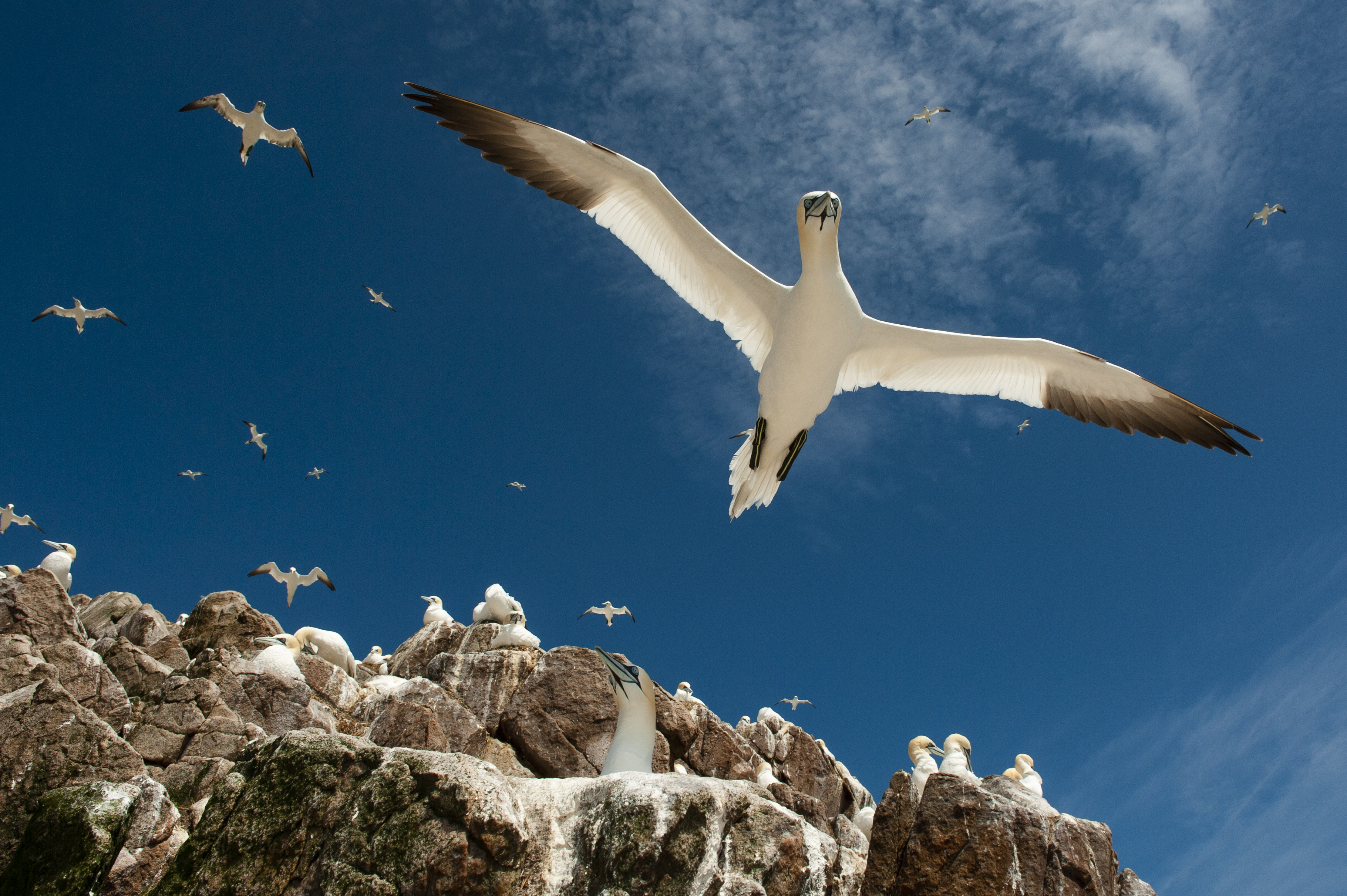 Birds in flight at the coast