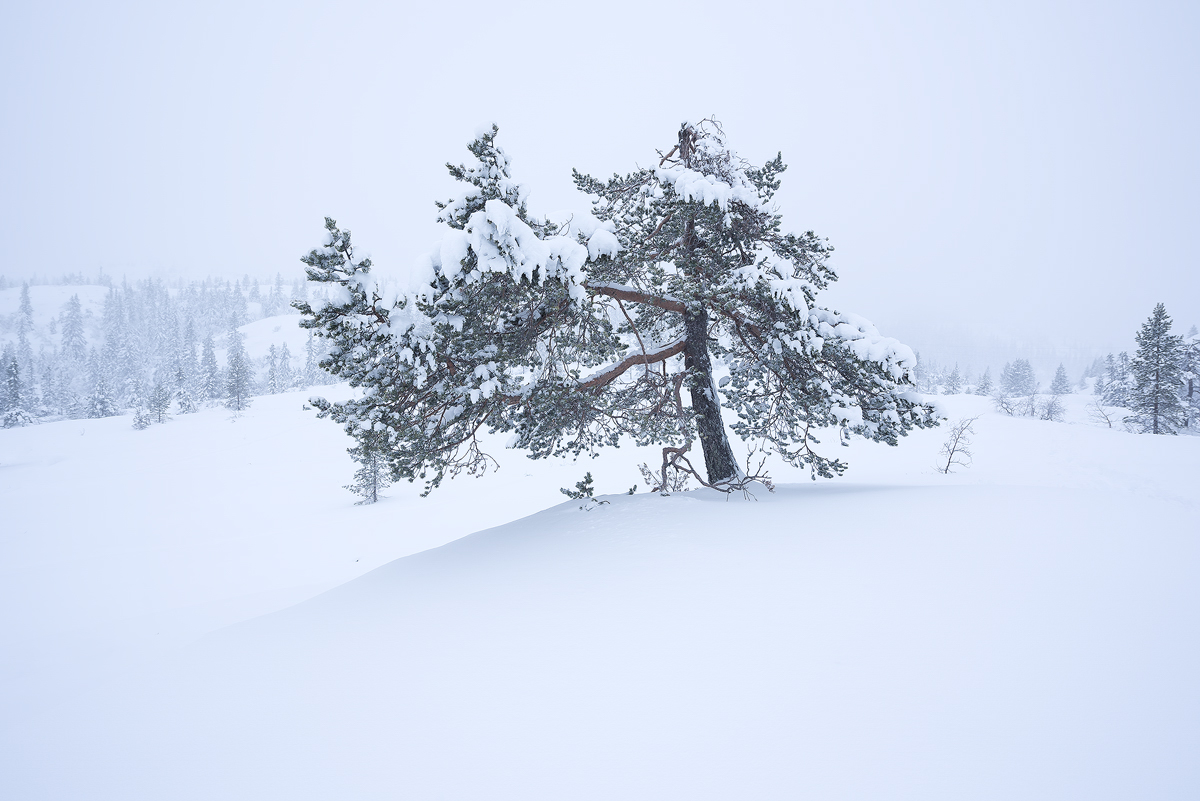 Winter scene with a snow covered tree
