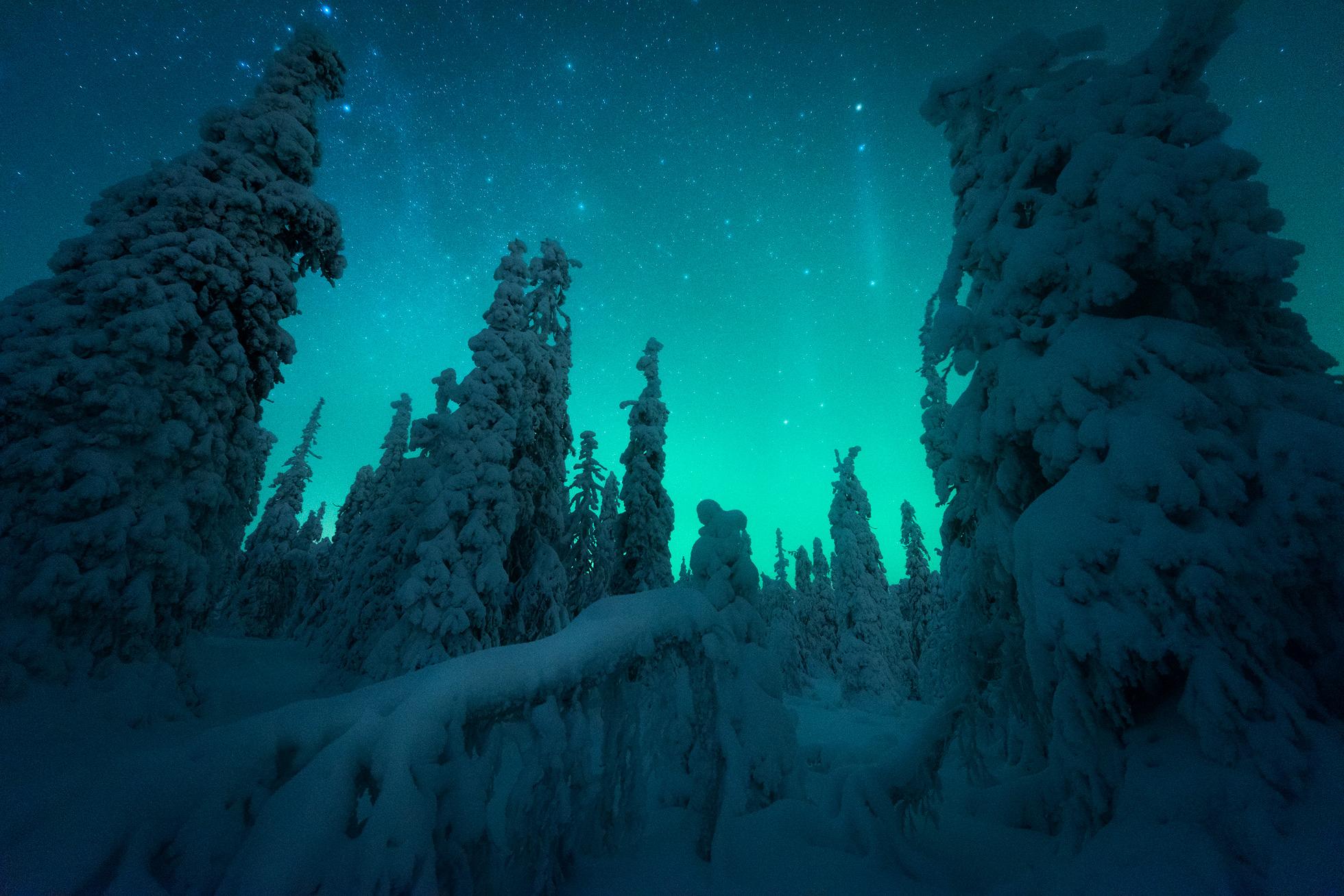 Snow covered trees under an aurora sky
