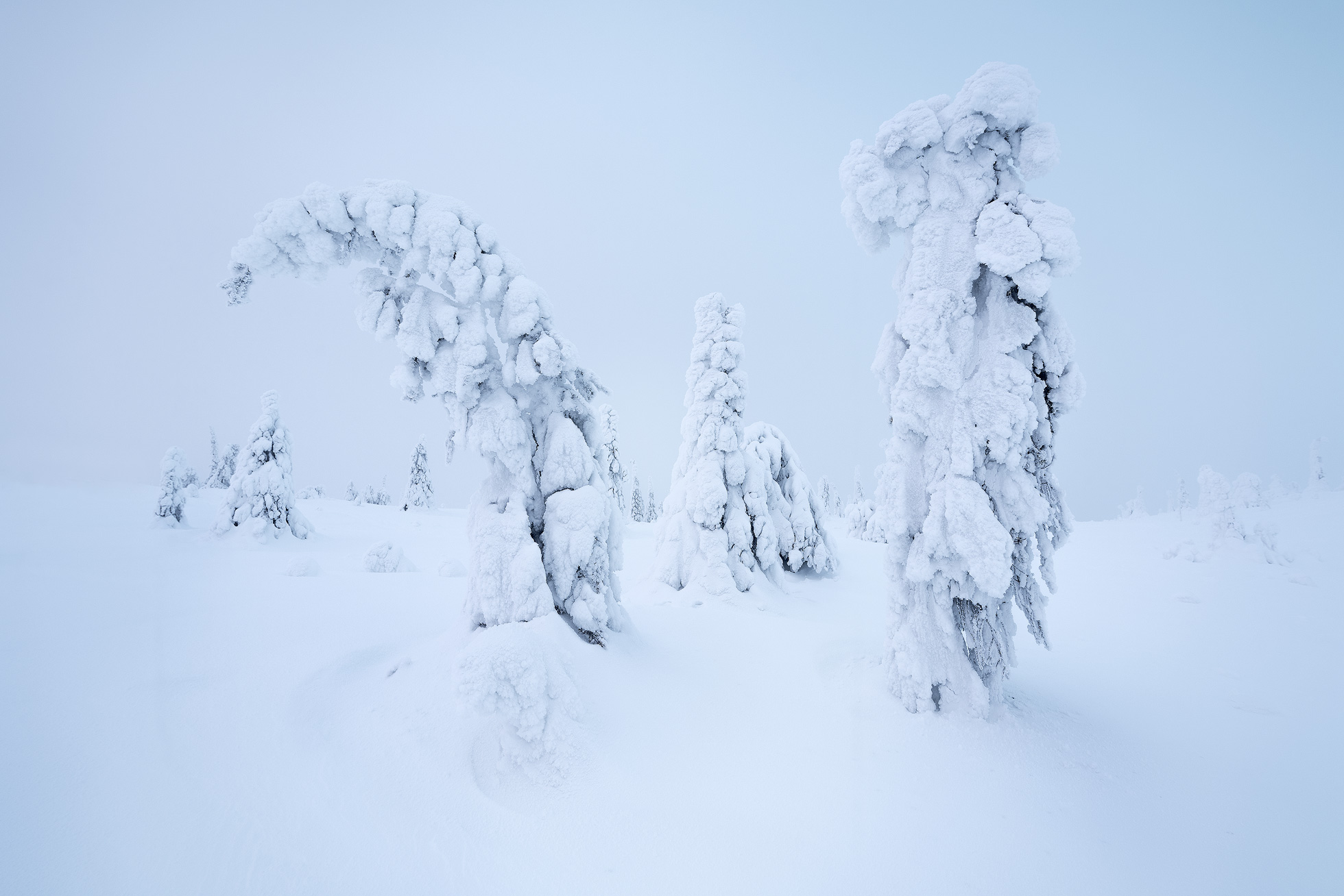 Winter tree landscape with snow covered trees