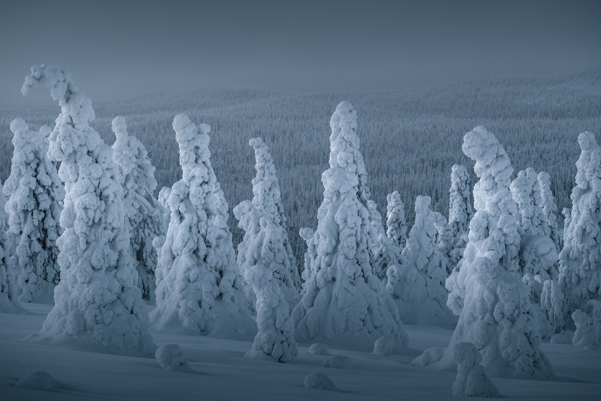 Winter forest scene with trees covered in snow