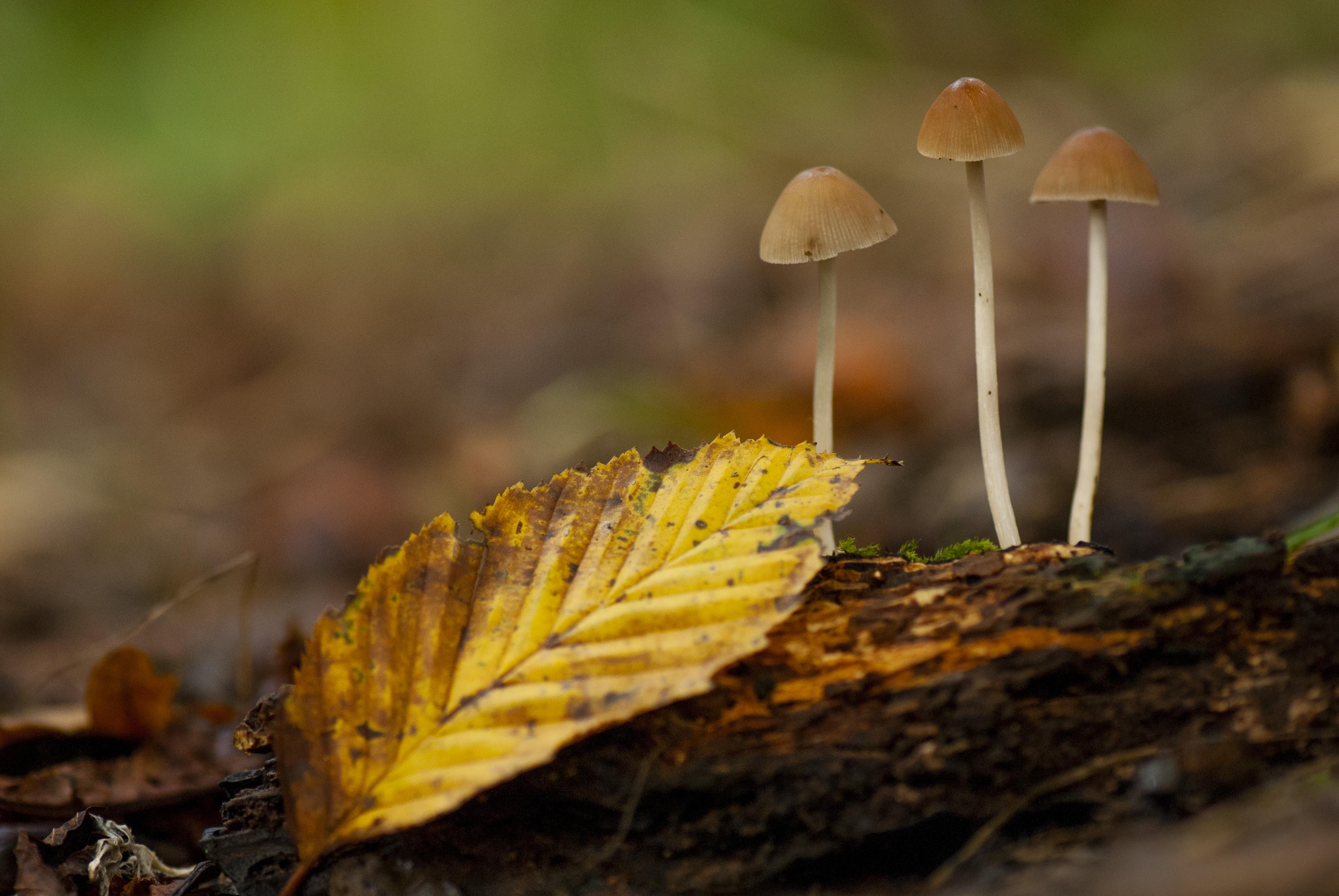 Macro shot of mushrooms on the forest floor