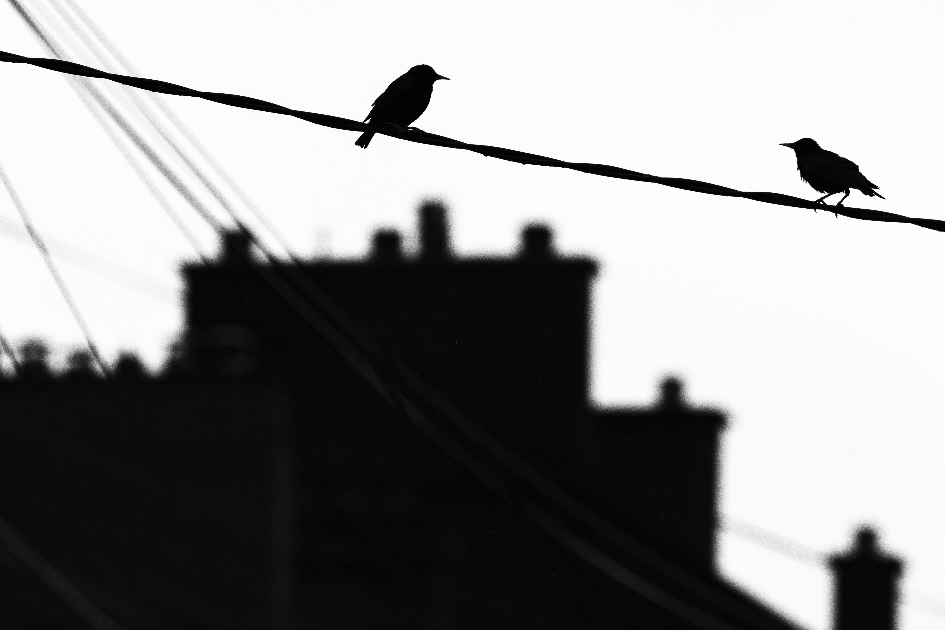 Two small birds on a telephone cable