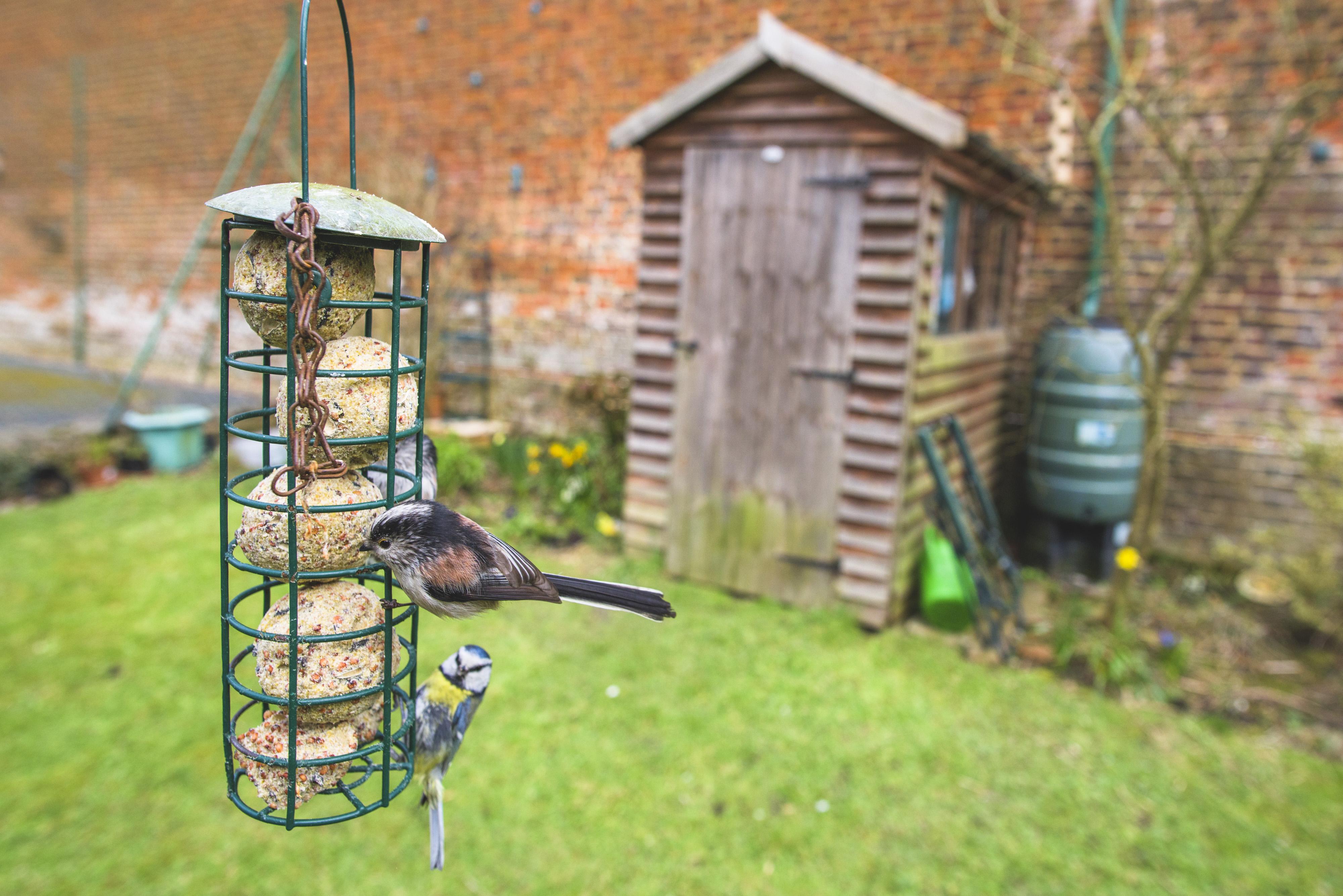 Bird and bird feeder in the garden