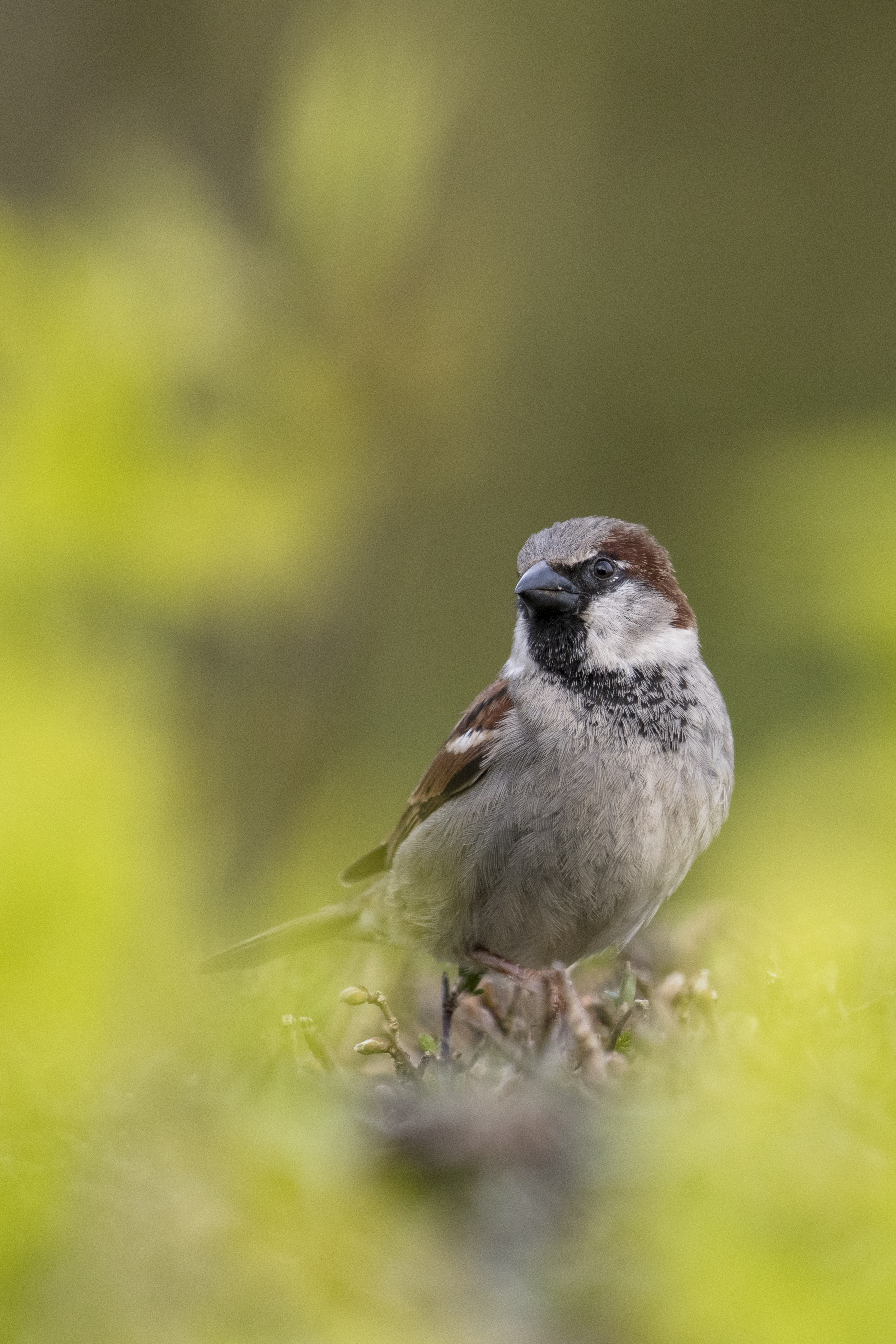 Portrait of a bird with a shallow depth of field