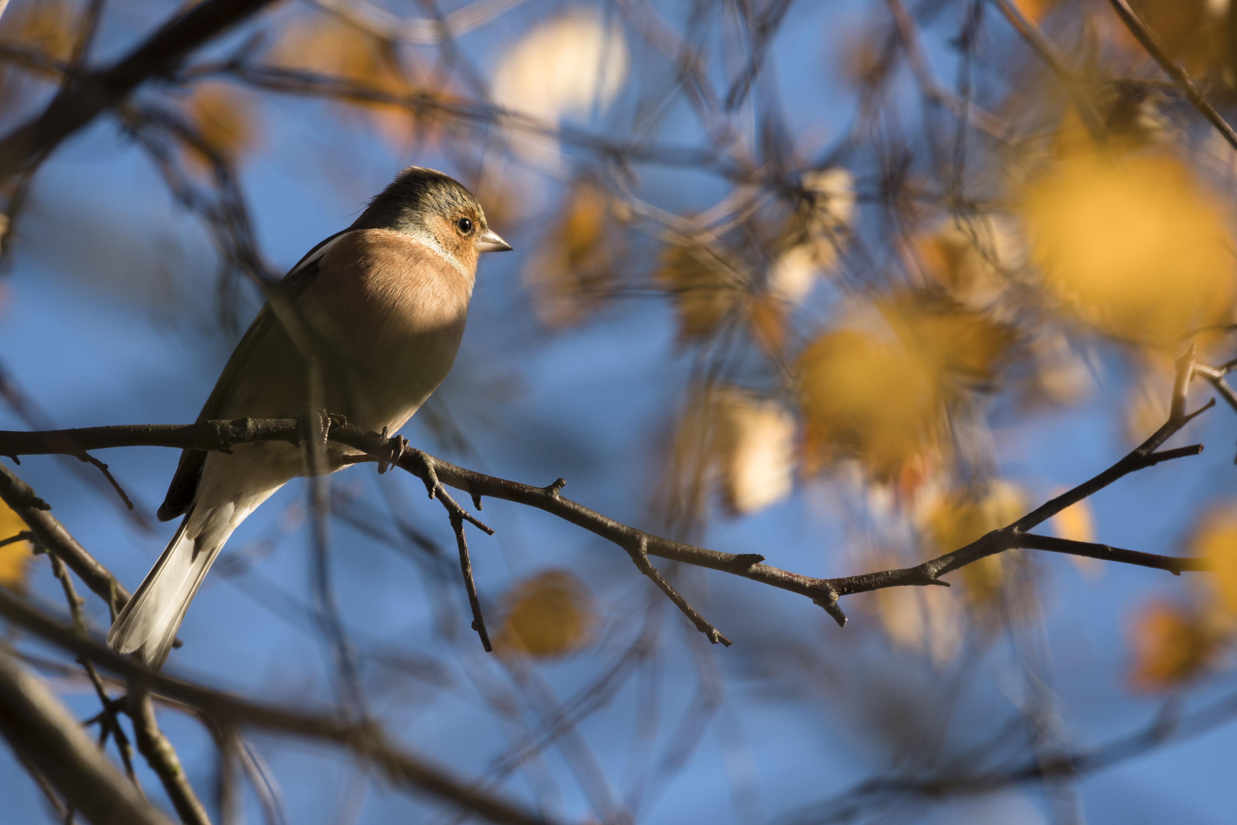 Bird on an autumnal tree