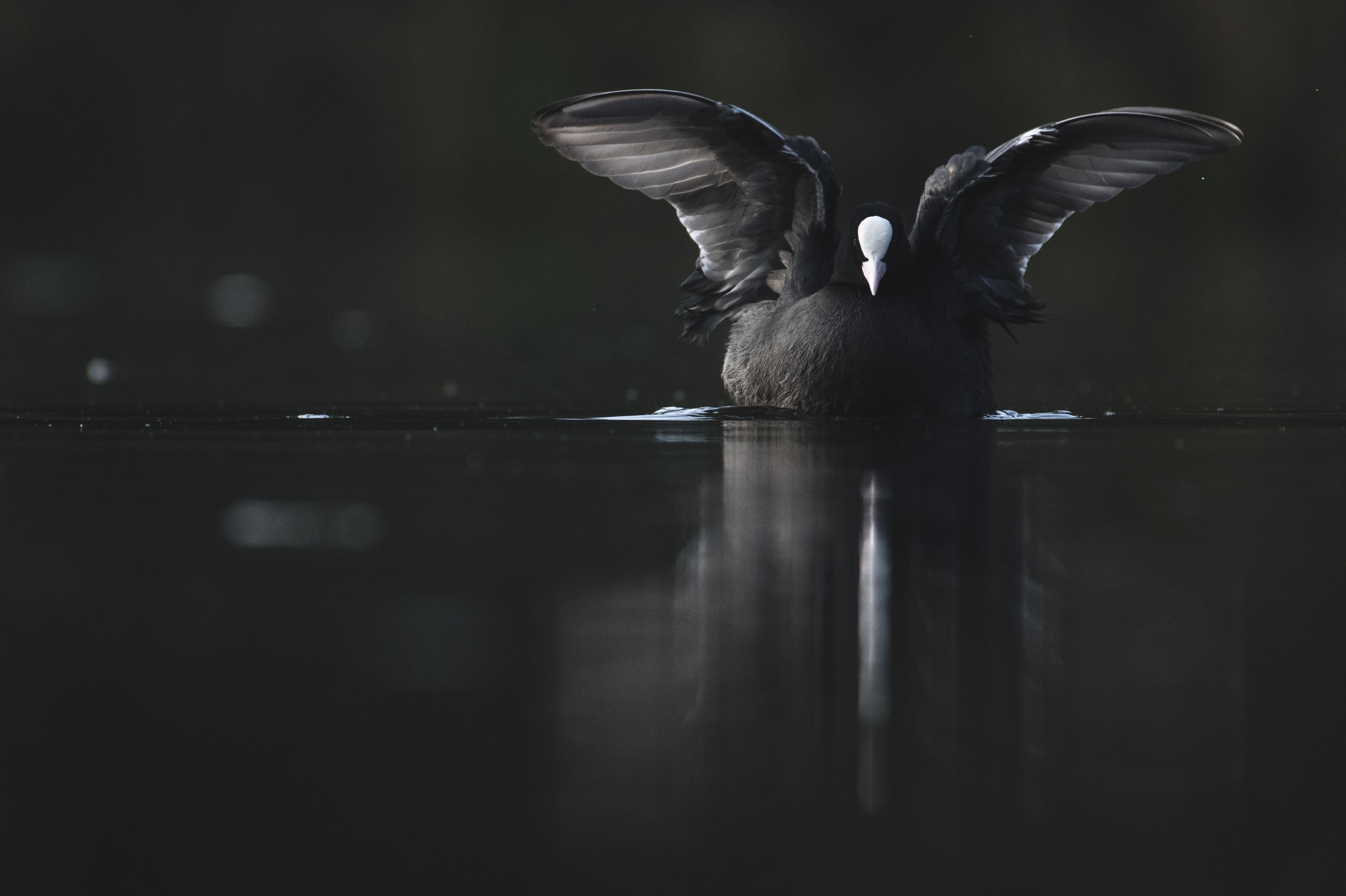 Bird flapping its wings on the water