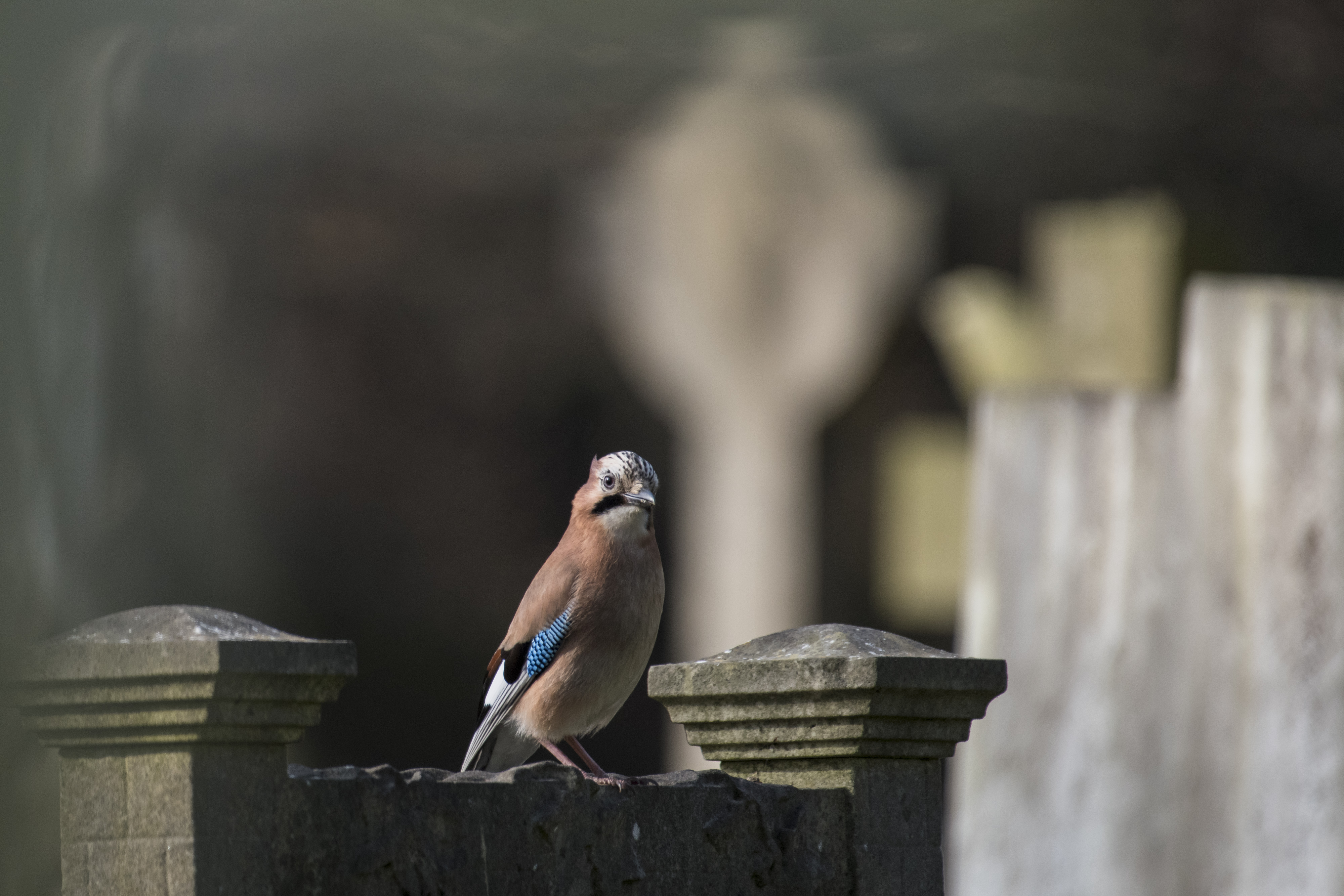 Bird in a graveyard