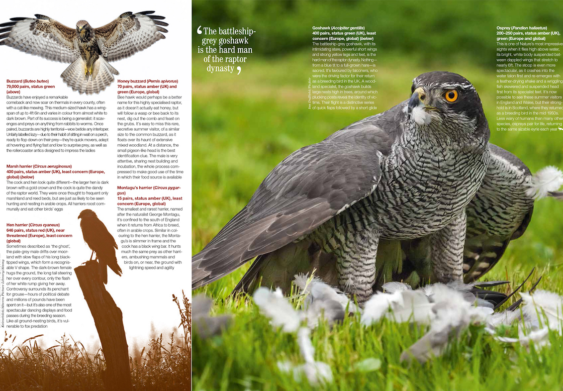 Double-page nature spread in a magazine