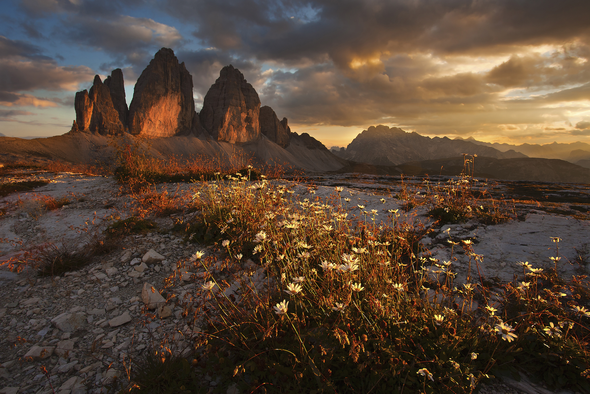 Sunset at the Three Monoliths, Dolomites, Italy, with a floral foreground interest