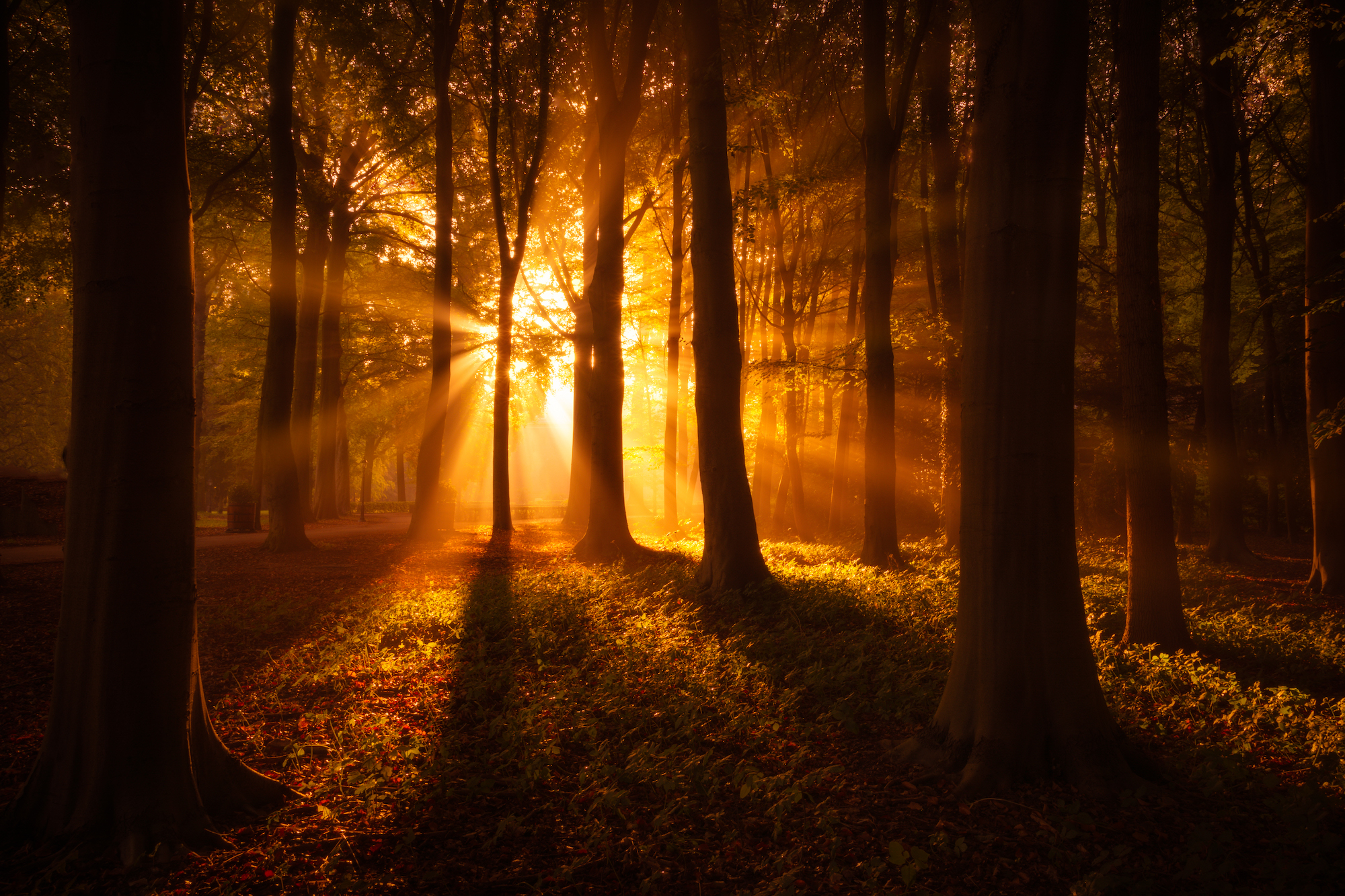 Golden hour in the forest with the sun shining through the trees