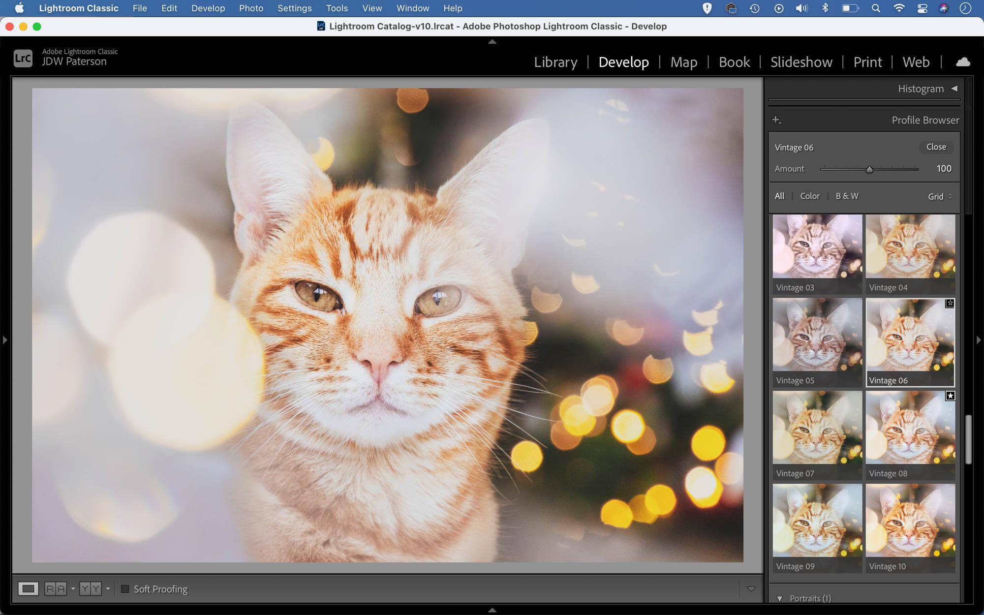 Giving a cat portrait a vintage look in Lightroom